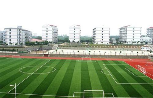 山东泰安球场人造草坪