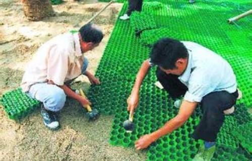 新疆乌鲁木齐草坪格哪里有卖的?